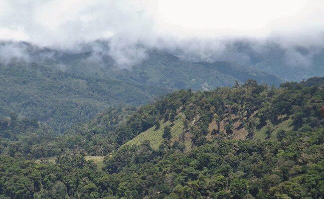 coffee landscape in Panama